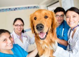 Ветеринария и сельское хозяйство