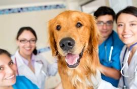Изучение ветеринарии в Великобритании