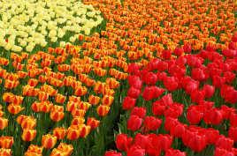 Советы студентам по подготовке заявки на стипендию Orange Tulip Scholarship 2018/19